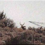 Don't know a lot about this buck, filmed near Cedar, UT.  Looks real good and wide.