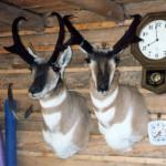 Robert/Karls Antelope (brothers)