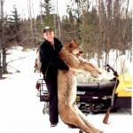 Dale Michie took this cougar from Interior of B.C. in January 2001.